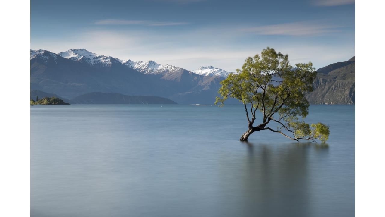 Edgewater That Wanaka Tree
